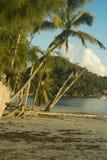 Palmen und alte Bäume auf Taubenschlag D'Or setzen Praslin auf den Strand Stockbilder
