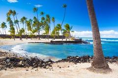 Palmen und alte hawaiische Wohnungen Stockbild