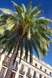 Palmen und Architektur in Barcelona lizenzfreies stockbild