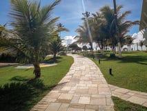 Palmen und Bäume im flachen Erholungsort von Brasilien stockfotos