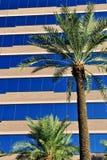 Palmen und Bürohaus stockbild