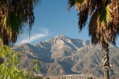 Palmen und Berge Stockbild