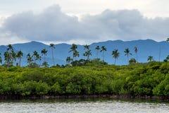 Palmen und Berge Stockfotografie