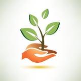 Palmen- und Betriebssymbol Stockfoto