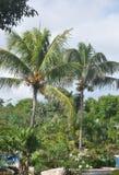 Palmen und blühende Büsche. Lizenzfreies Stockbild