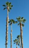 Palmen und blauer Himmel Stockfotografie