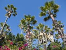 Palmen und Blumen Lizenzfreies Stockfoto