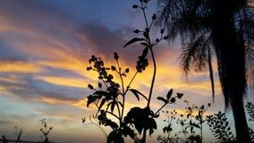 Palmen und Blumen während des Sonnenuntergangs Stockbilder