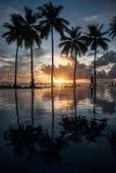 Palmen und bunter Sonnenuntergang stockfotos