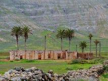 Palmen und eine Ruine Stockbilder