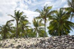 Palmen und felsige Küste Lizenzfreie Stockfotos