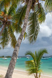 Palmen und festgemachte Boote Lizenzfreie Stockfotos