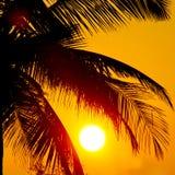 Palmen und große Sonne stockfoto