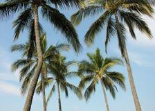 Palmen und Himmel Stockfoto
