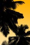 Palmen und Himmel lizenzfreie stockbilder
