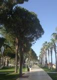 Palmen- und Kiefernallee entlang dem Meer in Antalya stockfotos