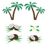 Palmen und Kokosnüsse Lizenzfreie Stockfotos