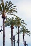 Palmen und Lampen Lizenzfreie Stockfotos