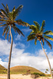 Palmen und Moai Stockfotografie