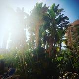 Palmen und Morgensonnenschein Lizenzfreie Stockbilder