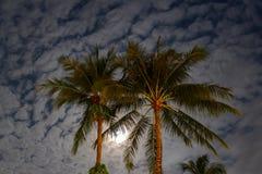 Palmen und nächtlicher Himmel Lizenzfreie Stockbilder