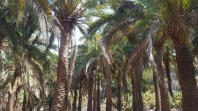 Palmen und Palmen stockfotografie