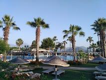 Palmen und Pool Lizenzfreies Stockfoto