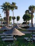 Palmen und Regenschirme Stockbild