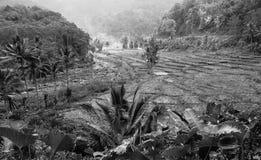 Palmen und Reispaddys, B/W, Schatten und Kontrast, Flores, Indonesien Lizenzfreie Stockfotos