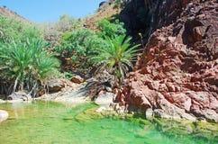 Palmen und rote Felsen in der Oase von Dirhur, natürliches Pool, Socotra-Insel, der Jemen Stockfotografie