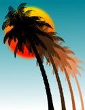 Palmen und Sonne Stockfotos