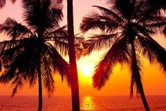 Palmen und Sonne, Lizenzfreies Stockfoto