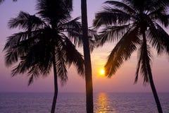 Palmen und Sonne, Stockfoto