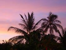 Palmen und Sonne Lizenzfreies Stockfoto