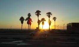Palmen und Sonnenuntergang Lizenzfreie Stockbilder