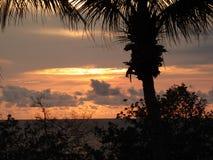 Palmen und Sonnenuntergang Lizenzfreie Stockfotos