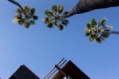 Palmen und Spitzen klären Himmel-Ansicht Stockfotografie