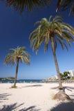 Palmen und Strand stockbild
