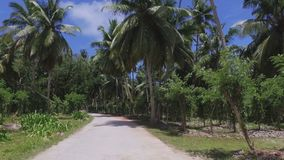 Palmen und Vanille-Anlagen auf exotischer Insel, La Digue, Seychellen stock footage