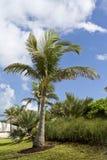 Palmen und Vegetation Stockbild