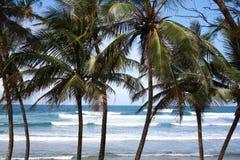 Palmen und Wellen Lizenzfreies Stockfoto