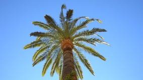 Palmen und wolkenloser Himmel stock footage