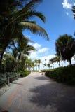 Palmen und Ziegelsteingehweg Stockfotos
