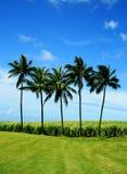 Palmen und Zuckerrohr stockfotos