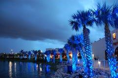 Palmen unter blauer Leuchte Stockfoto