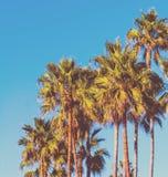 Palmen unter einem blauen Himmel in der Weinlese tonen Lizenzfreies Stockfoto