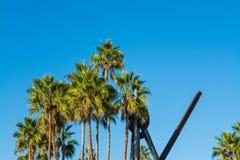 Palmen unter einem blauen Himmel in Venedig setzen auf den Strand Stockbild