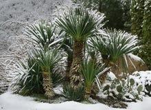 Palmen unter Schnee stockfotografie