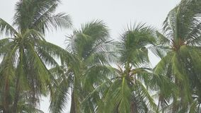 Palmen unter starkem Regen stock video