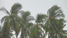 Palmen unter starkem Regen stock footage